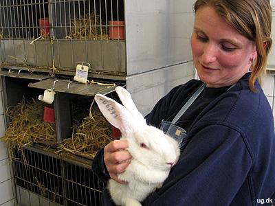 Forsøgskanin - Folk med gigt i knæet kan sende kaninen Frida en venlig tanke.