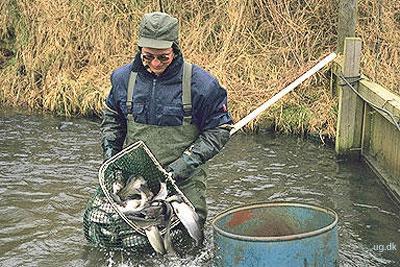 foto af fiskeassistent