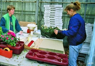 foto af planteskolegartnere