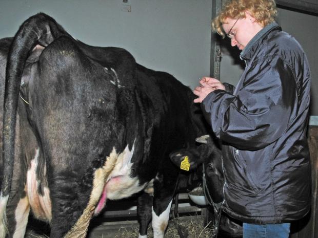 interview med veterinærstuderende