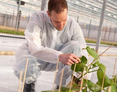foto af sektorforsker