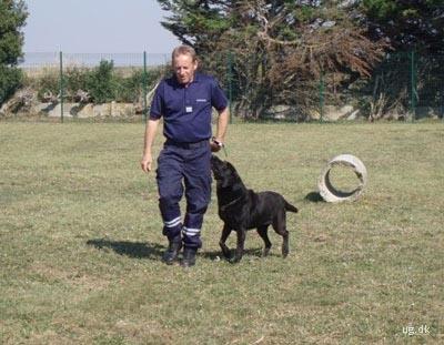 foto af toldbetjent med hund