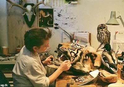 foto af zoo-konservator