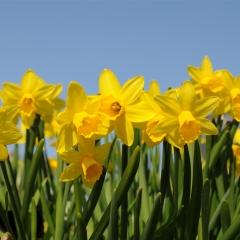 Åbningstider i foråret