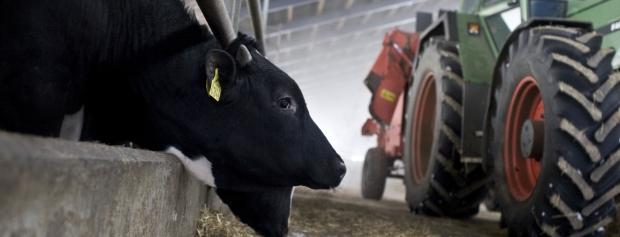 amu i husdyrproduktion i landbruget
