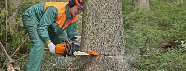 amu i skov- og naturforvaltning og naturformidling
