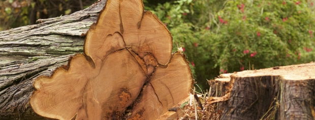 kandidatuddannelse i Skovbrugsvidenskab