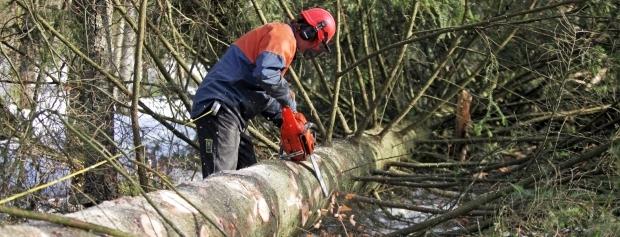 Skov- og naturtekniker ved at fælde et træ